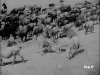 Cow-boys en Israël